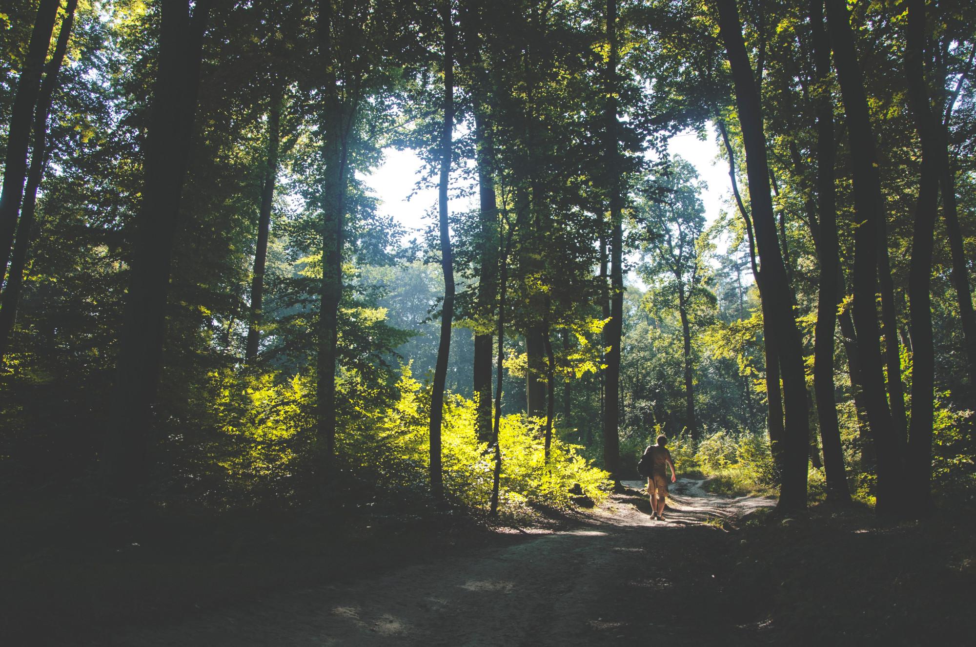 Waldweg ein Spaziergänger
